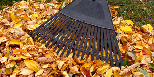 Fall Clean Up Services in Shelby Township, Michigan
