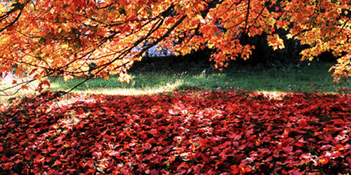 Fall Landscaping Services in Lake Orion, Michigan